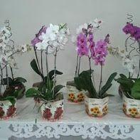 Orquídeas R$ 80,00