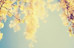 Fall Bokeh: by Kristybee on Etsy