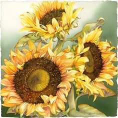Sunflower paintings are often a treat to eyes. Van Gogh sunflower painting series is considered Sunflower Painting Van Gogh, Sunflower Art, Watercolor Sunflower, Watercolor Flowers, Watercolor Paintings, Sunflower Paintings, Watercolors, Art Floral, Botanical Illustration