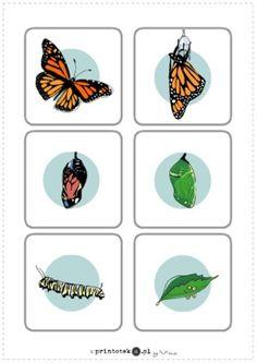 Znalezione obrazy dla zapytania cykl rozwojowy motyla historyjka obrazkowa Very Hungry Caterpillar, Montessori, Hungry Caterpillar
