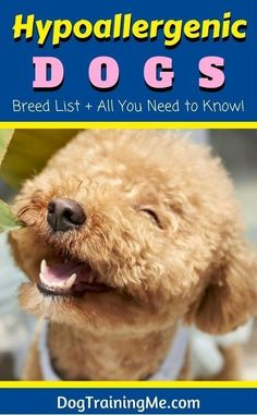 Hypoallergenic dog breeds are great for allergy sufferers. We cover what to consider when choosing a low allergenic dog, how to keep your dog and your home clean, and we have a breed list of hypoallergenic dogs. Read our article for more. Dog Breeds List, Best Dog Breeds, Pet Dogs, Dogs And Puppies, Doggies, Allergic To Dogs, Hypoallergenic Dog Breed, Choosing A Dog, Dog Itching