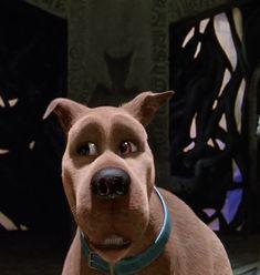 Scooby Doo Dog, Scooby Doo Movie, Daphne From Scooby Doo, Scooby Doo Images, Scooby Snacks, Mystery, Sci Fi, Glossy Lips, Cartoon
