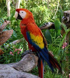 http://aya-katz.hubpages.com/hub/How-to-make-a-rainforest-diorama