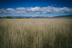 Balade dans le parc naturel des Aiguamolls  #Aiguamolls #Campagne #Catalogne #Catalonia #CostaBrava #Espagne #España #Landscape #Nature #Paysage #Reeds #Roseaux #Spain #catalunya #countryside #landscapes #paysages
