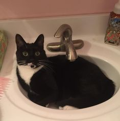 Purrfect fit (i.redd.it) submitted by Thundergnomee to /r/CatsInSinks 0 comments original   - #Funny #Cats - Cute Kittens - LOL #Purrito Memes - #Pets in Clothes - Kitty Breeds - Sweet Animal Pictures