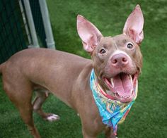 SKYE - A1119099 - - Manhattan  TO BE DESTROYED 08/26/17 **ON PUBLIC LIST** -  Click for info & Current Status: http://nycdogs.urgentpodr.org/skye-a1119099/