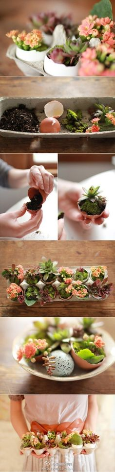 egg shell succulent planters