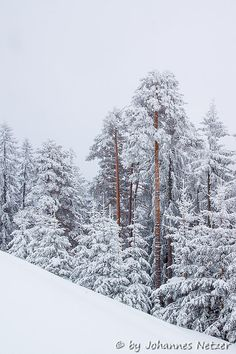 trees at a snowy winterday at the alps of vorarlberg - austria Ice Pictures, Snow And Ice, Winter Pictures, Rocky Mountain National Park, Winter Snow, Landscape Photos, Alps, Rocky Mountains, National Parks