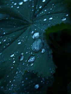 Droplets on teal