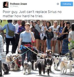 Daniel Radcliffe has a new job! And he's totally killing it. Here Is A Picture Of Daniel Radcliffe Walking 12 Dogs While Smoking A Cigarette Daniel Radcliffe, Harry Potter Love, Harry Potter Fandom, Harry Potter Memes, Fandoms, Ron Y Hermione, No Me Importa, Fantastic Beasts, Hogwarts
