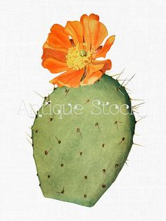 Prickly Pear Cactus Drawing | Prickly Pear Cactus 2004 Watercolor ...