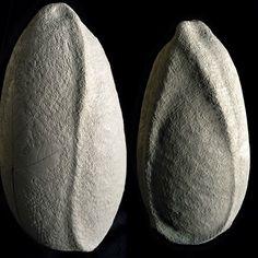 Urne funéraire biodégradable en grès papier #myzima