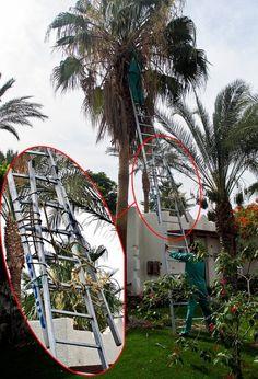 Number: 79  Equipment Used: x2 Single Section  Extension Ladders  Equipment Needed:Double Section Extension Ladder   Danger level: 3