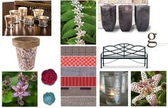 Plant Inspired Garden Mood Boards - Exotic Romance & The Toad Lily Exotic Beauties, Gypsy Style, Toad, Mood Boards, Orchids, Garden Design, Bloom, Romance, Lily