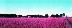 Photo taken by kleinerkaries - http://www.lomography.com/photos/films/871954447-lomochrome-purple-400/popular/18869849
