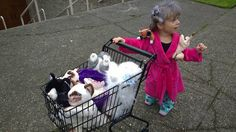 """This delightful photo was recently shared by Redditor marcdoll along with the caption """"My daughter's destiny as the crazy cat lady.""""    We love a Crazy Cat Lady and this awesome little girl, who must be attending the Eleanor Abernathy School of Charm and Gibberish, clearly has a bright, if fur-coated, future ahead of her. (We just hope she skips the Eleanor's classes devoted to cat-tossing.)    [via Fashionably Geek]"""