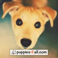 Top 50 Breeds ebook Giveaway - Puppies 4 All - 2019 Your Best Friend, Best Friends, Loyal Friends, Like Animals, Cute Animal Pictures, Awesome, Amazing, Puppies, Dog