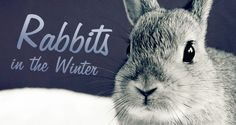 Winter care for rabbits - Make sure your rabbits are tucked in and ready for the winter months. With winter creeping in and the weather starting to get colder, it's now the time to think about bringing your rabbits or other small animals indoors. But, if that's not possible here are some tips to make sure they are nice and comfortable over the winter months...