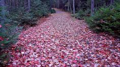 Autumn Trails In Victoria Park in Nova Scotia Canada. [OC] [2048x1152]