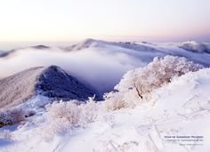 Snow on Sobaeksan Mountain (Yeongju-si, Gyeongsangbuk-do) south korea