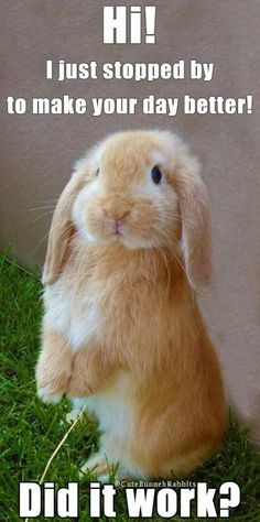 It worked very well Cute Small Animals, Cute Funny Animals, Funny Cute, Animals And Pets, Baby Animals, Funny Bunnies, Baby Bunnies, Cute Bunny, Funny Animal Memes