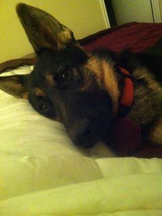 A dormir!!! German, Dogs, Animals, To Sleep, Deutsch, Animales, German Language, Animaux, Pet Dogs