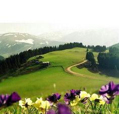 Çambaşı Plateau, Ordu, Eastern Blacksea Region of Turkey