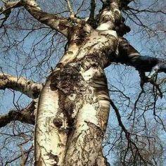 Alex 74: Der Baum sieht aus wie eine Frau
