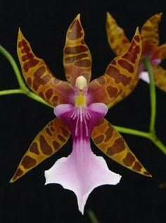 La Orquídea y sus asombrosas formas | Cuidar de tus plantas es facilisimo.com