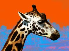 """Giraffe"" Canvas Prints by billythekidtees | Redbubble"