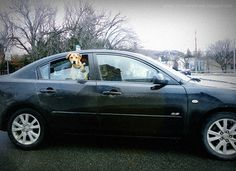 Fido Greets Me at a Stop Light..... | Flickr - Photo Sharing!