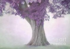Treeness in Mauve by Hal Halli Mauve, Trees, Beauty, Bed, Stream Bed, Tree Structure, Beds, Beauty Illustration, Wood