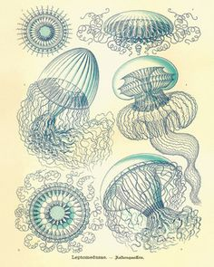 Vintage Jellyfish Prints by Antique Wall Art - modern - prints and posters - Etsy