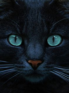 Eyes of blue cat. Copyright: Bildagentur Zoonar GmbH. °