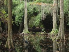 You can imagine so many things-a plantation near Charleston. and a book i could get lost here