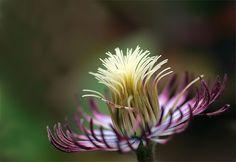 Sans Petals by webworm