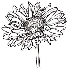 black and white flower line drawings Flower Line Drawings, Botanical Line Drawing, Botanical Illustration, Drawing Flowers, Paint Flowers, Flower Coloring Pages, Colouring Pages, Drawing Sketches, Art Drawings