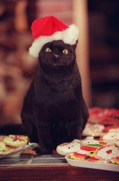 Salem: Sabrina the Teenage Witch Salem Sabrina, Sabrina Cat, Salem Cat, Salem Saberhagen, Cat Santa Hat, Christmas Pops, Christmas Train, Merry Christmas, F2 Savannah Cat