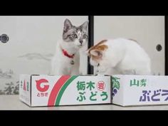 Cats played in the box.