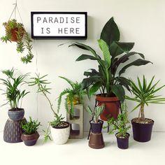 fotos de plantas variadas