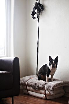 DIY Dog Bed Made from Childrens Mattresses on Brigg, Remodelista