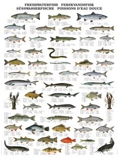 Freshwater Fish Fish Chart Freshwater Fish Fish