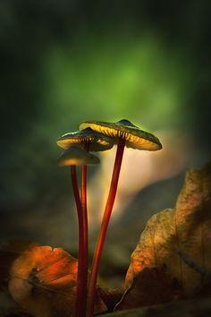 "coffeenuts: "" wowtastic-nature:three by Detlef Knapp on 500px.com """