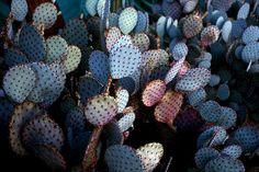 Palm Spring, California Alex Greenburg