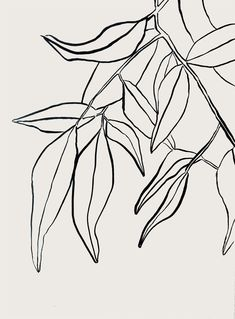 Sumi leaves botanical drawing via besotted.