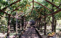 #lemon #farm Lemon Farm, Sorrento, Pizza, Food, Meal, Essen, Hoods, Meals, Eten
