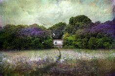 Wisteria And Wildflowers by Distressed Jewell, via Flickr