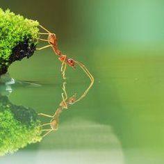 【あり  螞蟻  Ants】  Artur Stankiewicz Member Profile -- National Geographic Your Shot