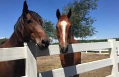 Wine: This winery rescues horses | Long Island Pulse Magazine, Long Island, New York