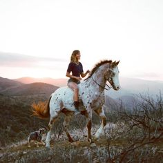 New dream: ride a GORGEOUS appaloosa up a mountain with my dog. And have a friend there to take photos All The Pretty Horses, Beautiful Horses, Animals Beautiful, Cavalo Wallpaper, Animals And Pets, Cute Animals, Appaloosa Horses, Equine Photography, Sunset Photography